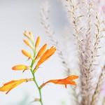 fleurs bouquet de mariées caen dale fleurs photographe normandie